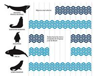 La riqueza marina de la provincia del Chubut