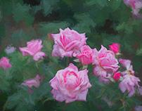 Roses at Longwood
