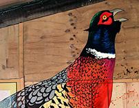 Burt the Pheasant - a mural