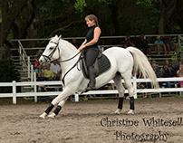 Florida Lippizaner Horse Show 2014