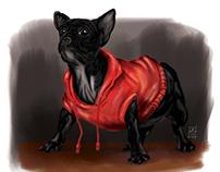 Perro con capucha