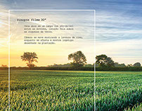 Art Direction - Ads - VIVA Propaganda