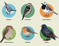 Birding marathon «Malinovka 2014»
