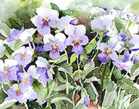 Miniature Purple Pansies