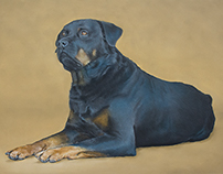 "Pastel pet portrait - ""Virgil"""