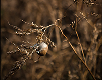 Of Avian Encroachments