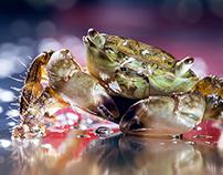 mrs Crab