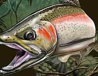 H2Outdoors steelhead