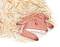 Freddie The Fox Children's Book