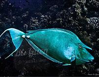 Photos : Underwater