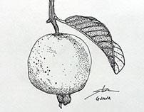 Fruit - November 2013