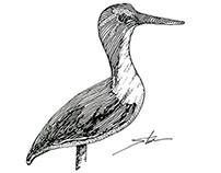 Shorebirds wood carvings - December 2013