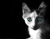 2014 Wondering Cat Photography