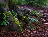 Green Forest august 2014