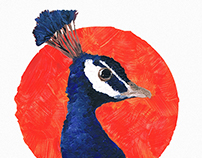 The Blue Peacock