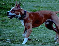 De perros y pelotas