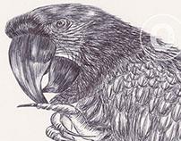 Ballpoint Pen Birds