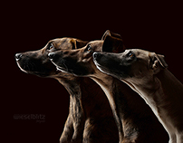 All Good Dogs - Come in Threes
