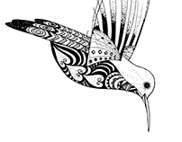 Illustration de colibri / Hummingbird Illustration