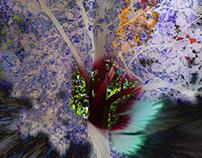3D & Trees