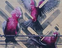 Australian Bird Illustrations