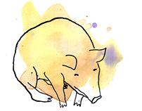 Pigis