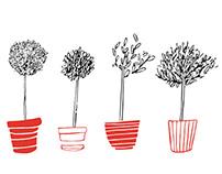 Benoit - plantes d'ambiance