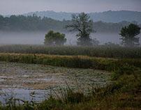 On Murky Pond