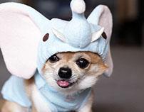 Temaiken - Perros disfrazados