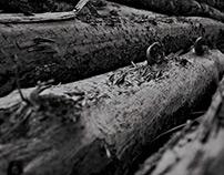 Kauri Timber Building