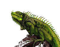 Sketches at the Zoo: The Iguana