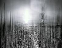Path in the corn field