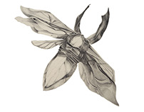 """""""Origami beetle"""""""