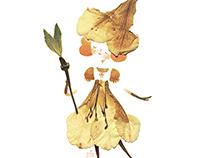 Pressed Flower Illustrations