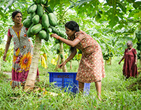 The Australian Aid program - Papaya Plantation Project