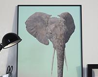 Joli Elephant, 2017