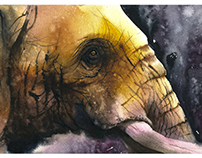 Video-process a portrait elephant