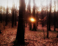 Morning in the woods