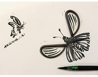 butterfly蝴蝶
