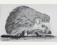 Hand Drawing Zoological Illustrations