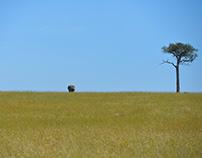 The Plains and Lone Trees of Maasai Mara - Kenya
