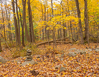 The Yellow Forest