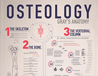 Grays Anatomy // Infographic
