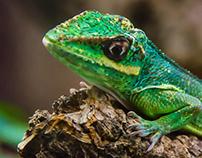 Reptiles faces
