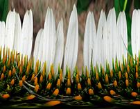 LAB - Unwrapped Flowers (Still + Digital Manipulation)