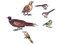 Bird, bird, bird...