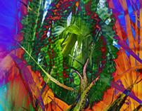 3D & Nature II