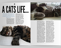 A Cats Life Magazine Editorial