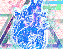 Human Heart Illustration & Development