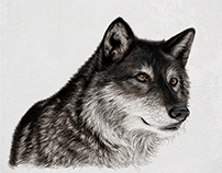 Gray Wolf: Digital Drawing
